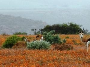 Namaqualand Flower Tour Photos