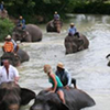One Hour Elephant Trekking