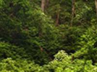 Rainforest hiking tour - world biosphere reserve