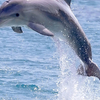 Red Sea: Full-Day Snorkeling & Dolphin Tour with Lunch