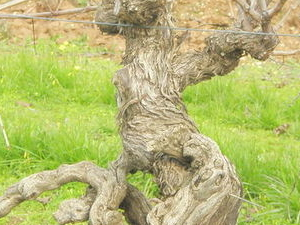 Small-Group Barossa Valley Wine and Food Tour from Adelaide Photos