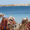 Snorkeling,Camel Riding In Blue Hole Around Sharm El Sheikh