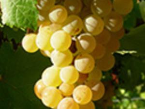 Tabali Vineyard Wine Tour & Del Encanto Valley Photos