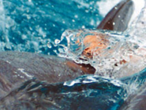 Tour To Swim With Dolphins In Sharm El Sheikh Photos
