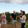 Wine tasting tours of selected boutique wineries