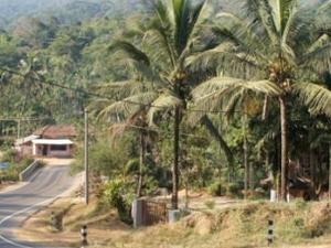 Enjoy at coffee plantation