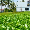 Rice paddy view / abalihouse