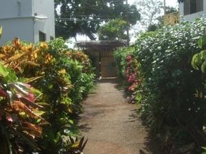 Catcha Falling Star Gardens