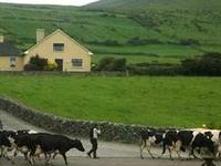 Garveys Farm House