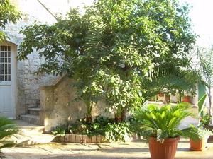 Masseria S. Domenico