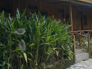 Ue datu Lodge and Cottages