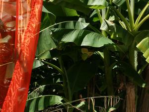 Wiki Hostel & Green Village