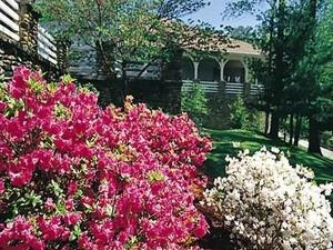 Pine Mountain State Resort