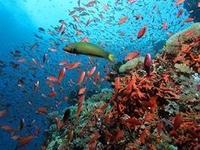 Mermaid Resort Puerto Galera