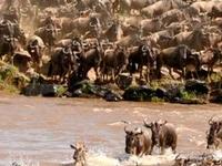 3 Days 2 Nights - Masai Mara National Reserve