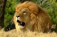 Cape Town Safari Photos