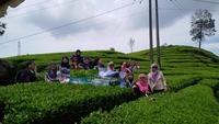 Tea Plantation Rancabali