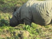 Bardiya Wildlife Safari Package