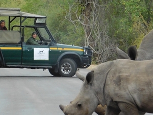Safari Experience of the Kruger National Park