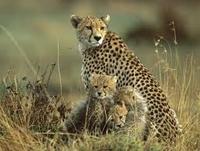 Blue Safaris