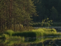 Nuuksio National Park: Day & Night with Nature