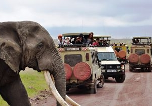 Northern Tanzania Wilderness Safari Vacation Photos