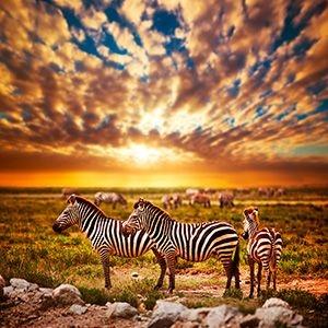 Leopard Southen Tanzania Classic Adventure Photos