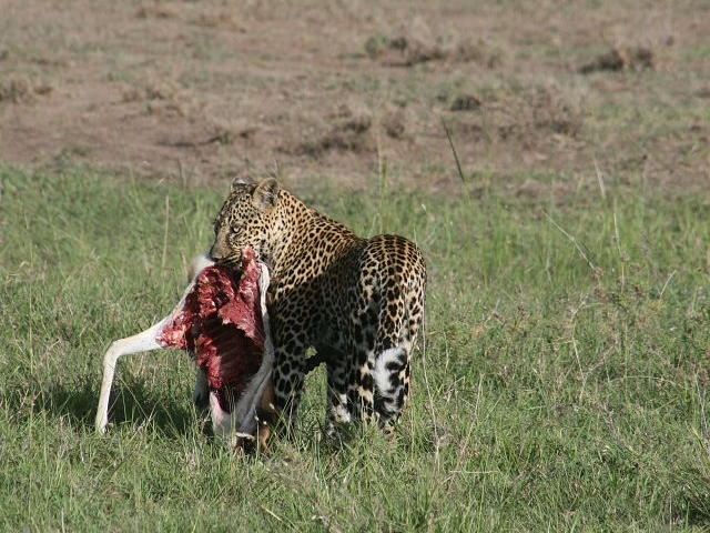 Kenya, Tanzania & Zanzibar Holidays Safari Photos