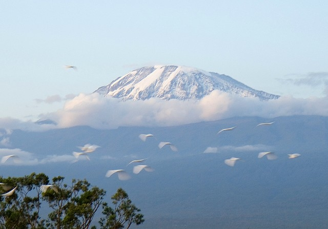 Trekking Mount Kilimanjaro - Umbwe Route Photos
