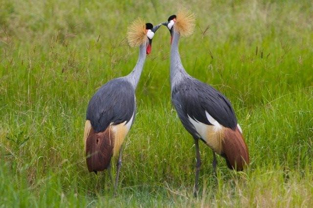 Discover Queen Elizabeth National Park Photos