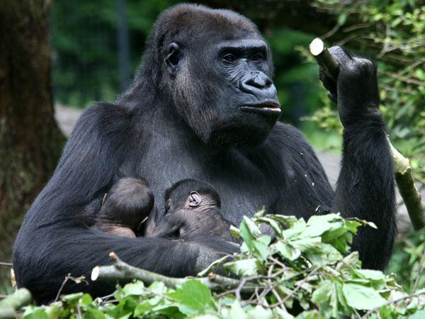 Gorilla Trekking & Uganda Wildlife Safari Photos