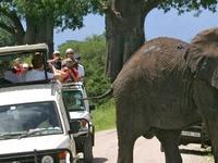 Wildlife Safari Tour from Tarangire to Serengeti