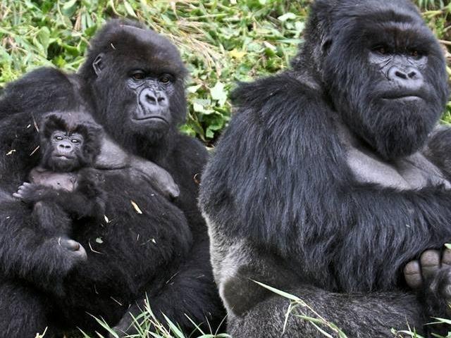 Welcome to Rwanda For Gorilla Trekking Photos