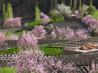 Cherry & Appricot Blossom Tour to Hunza Valley
