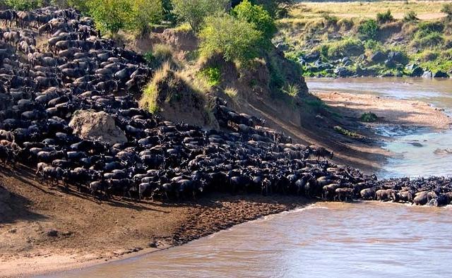 Lets Go to Maasai Mara Photos