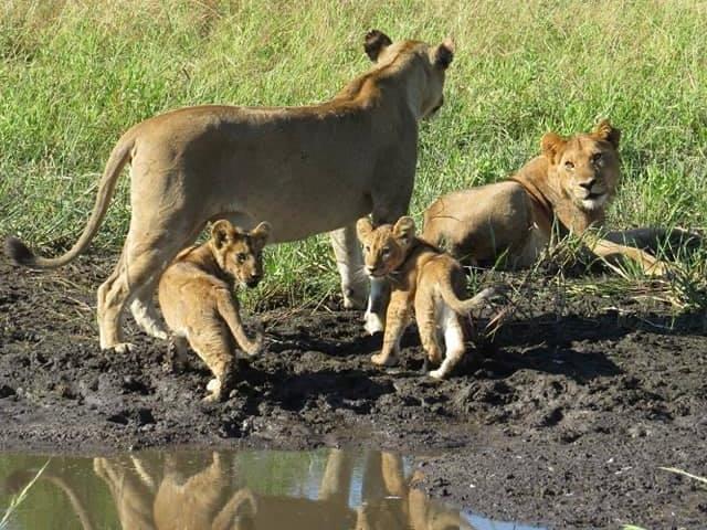 Okavango Delta and Moremi Game Reserve Photos
