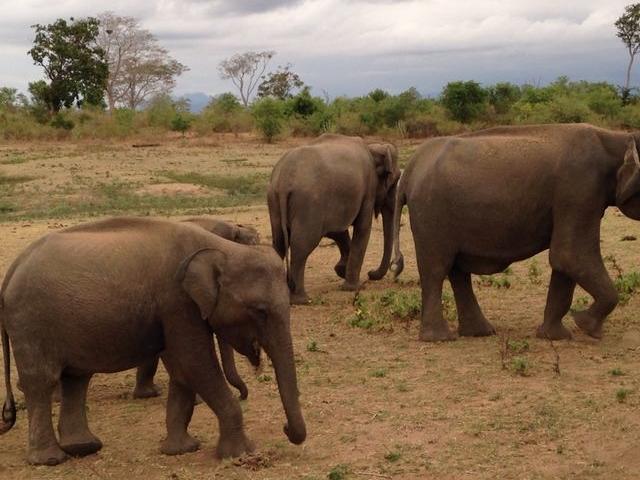 Pinnawal Elephant Orphanage Tour Photos