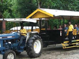 Prospect Estate Jitney Adventure and Camel Ride from Ocho Rios Photos