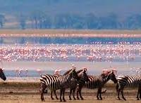 Safari to Serengeti, Ngorongoro Crater