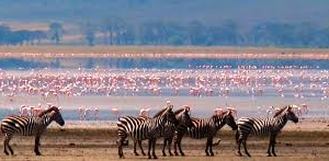 Safari to Serengeti, Ngorongoro Crater Photos