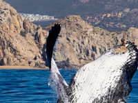 Early Birds for Whale Watching in Cabo San Lucas