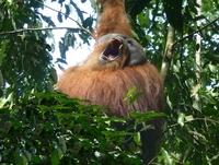 Sumatra Ecotours