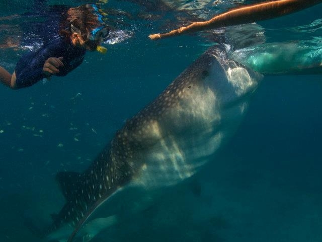 Whale Shark Snorkeling and 3 Waterfalls Tour Photos