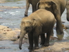 Tour Package Sri Lanka