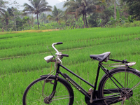 Borobudur Traditional Village Tour