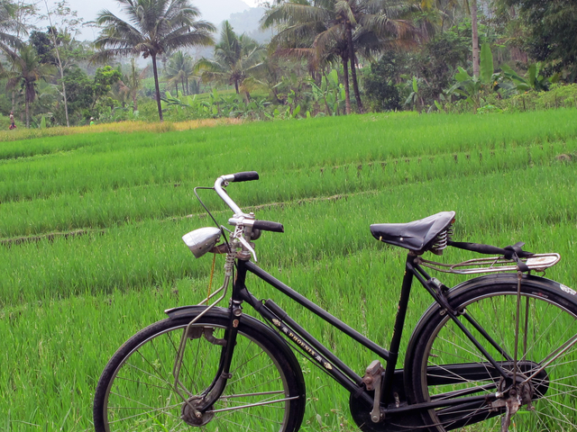 Borobudur Traditional Village Tour Photos