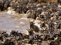 4 Days Serengeti Wildebeest Migration