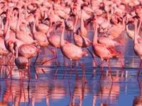 Amboseli, Lake Nakuru Maasai Mara Wildlife Lodge Safari