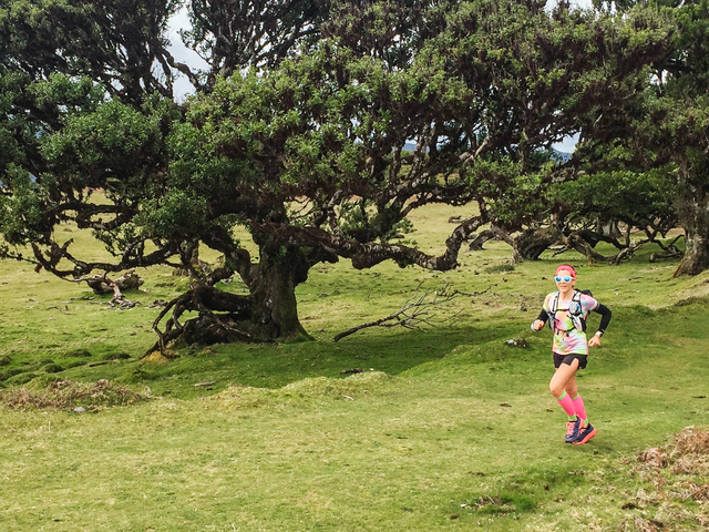 Fanal Ancient Forest Running Tour (Easy-Moderate) Photos