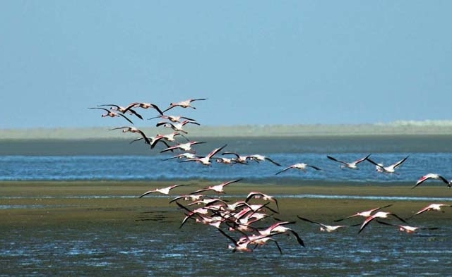 The Wildlife & Coast Experience Photos